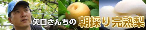 矢口さんちの梨