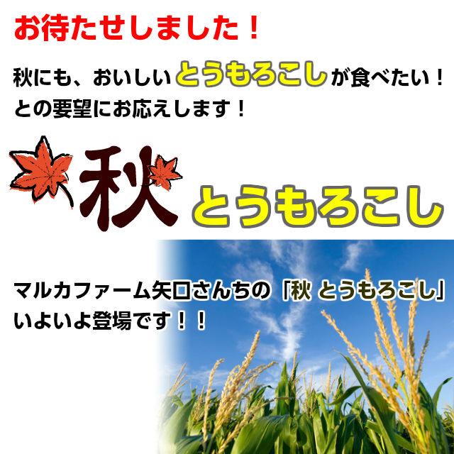 10月 とうもろこし,秋トウモロコシ,ゴールドラッシュ10本,朝採り,送料無料,ギフト