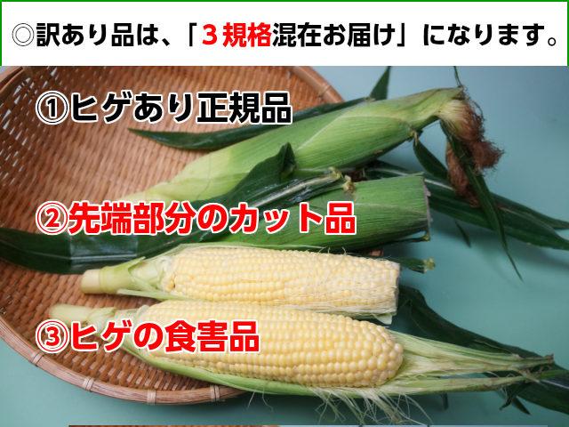 トウモロコシ訳あり品の写真を紹介 正規品の他、ヒゲの食害品、先端部分のカット品も入ります。