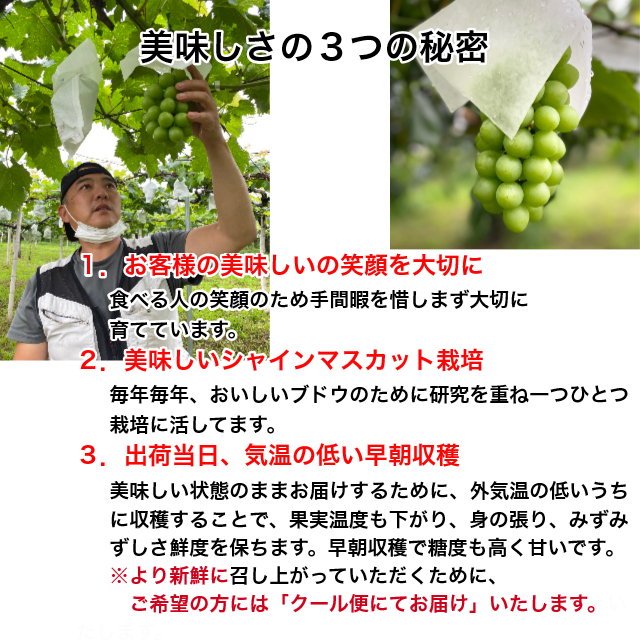 シャインマスカットの特徴。1.シャインマスカットは、なんといってもさわやかな黄緑色の美しさ。そして、果粒が大きくて甘く皮が薄いことから皮ごと食べられるブドウです。2.シャインマスカットのルーツは、親が「安芸津21号」と「白南」で、2006年に品種登録された新しいブドウです。3.保存方法は、アップや新聞紙に包むか、ポリ袋に入れるなど乾燥を避けて冷暗所又は冷蔵庫の野菜室で保管してください。届きましたら、なるべく早く召し上がってください。食べきれなかったらハサミで軸を残し粒をばらして冷凍保存してください。1か月くらいは美味しく召し上がれます。