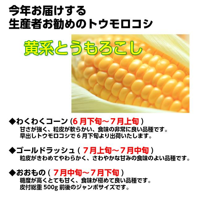 トウモロコシのラインナップです。1.わくわくコーン(6月下旬~7月上旬)甘さが強く、粒皮が軟らかい、食味の非常に良い品種です。早出しトウモロコシで6月下旬より出荷いたします。 2.ゴールドラッシュ(7月上旬~7月中旬)粒皮がきわめてやわらかく、さわやかな甘みの食味のよい品種です。3.おおもの(7月中旬~7月下旬)糖度が高くとても甘く、食味が極めて良い品種です。皮付総重500g前後のジャンボサイズです。,とうもろこし,トウモロコシ,朝採り,送料無料,ギフト