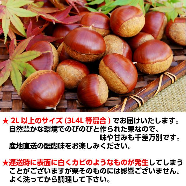 栗の収穫,くり,利平,丹沢,大峰,栗,お取り寄せ,ギフト