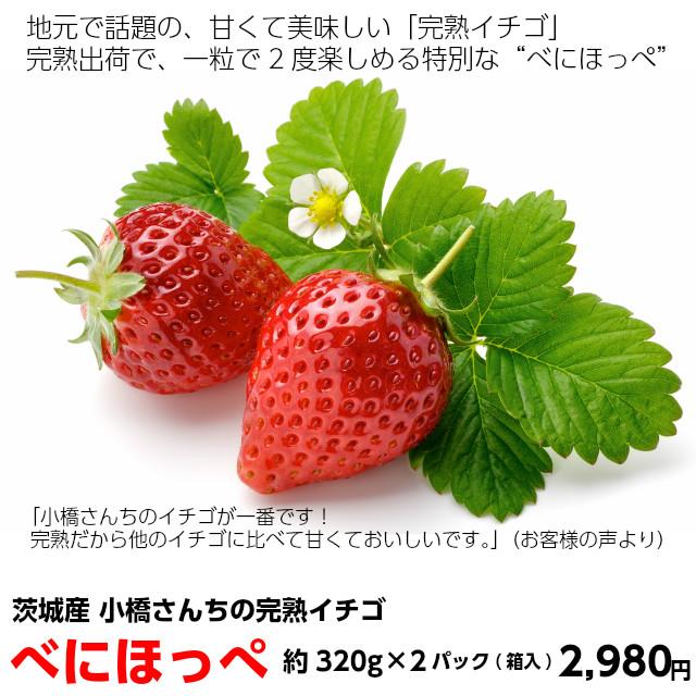 苺,いちご,イチゴ,べにほっぺ,小橋さんちの茨城のイチゴ,お取り寄せ,ギフト,地元で話題の、甘くて美味しい「完熟イチゴ」です。