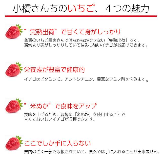 小橋さんちの新鮮で甘いイチゴ、4つの魅力。