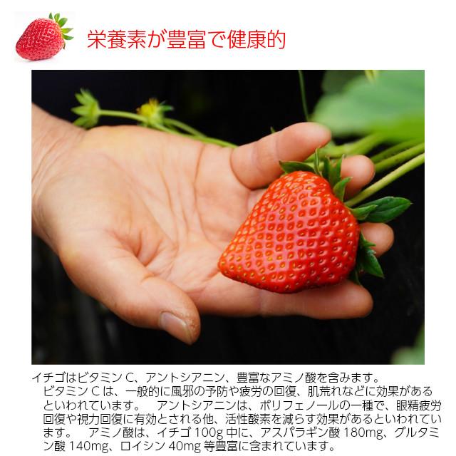 小橋さんちの新鮮で甘いイチゴ、栄養素が豊富で健康的
