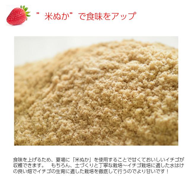 """小橋さんちの新鮮で甘いイチゴ、""""米ぬか""""で食味をアップ"""