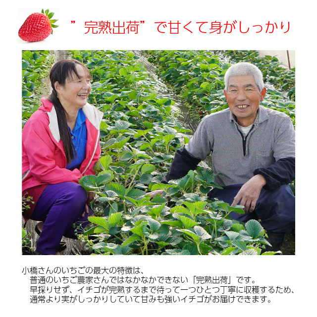 """小橋さんちの新鮮で甘いイチゴ、""""完熟出荷""""で甘くて身がしっかり"""