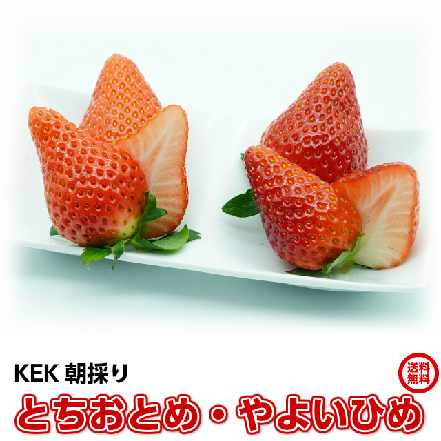 苺,いちご,イチゴ,とちおとめ,やよいひめ,KEK,完熟いちごの食べ比べセット,お取り寄せ,ギフト,地元で話題の甘くて美味しい「完熟イチゴ」です。