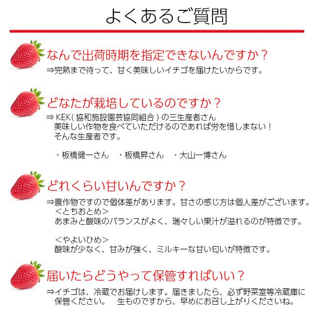 生産者の板橋健一さん、板橋昇さん、大山一博さんの三生産者がわが子の様に丹精込めて育てました。甘くて、酸味とのバランスのよい美味しいイチゴです。完熟にこだわって収穫してお届けします。