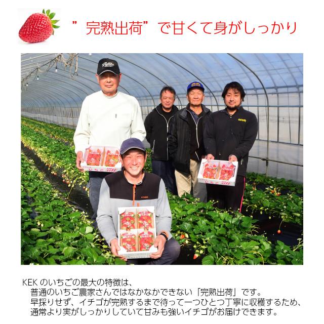 """KEK,いちご生産者,新鮮で甘いイチゴ、""""完熟出荷""""で甘くて身がしっかり"""