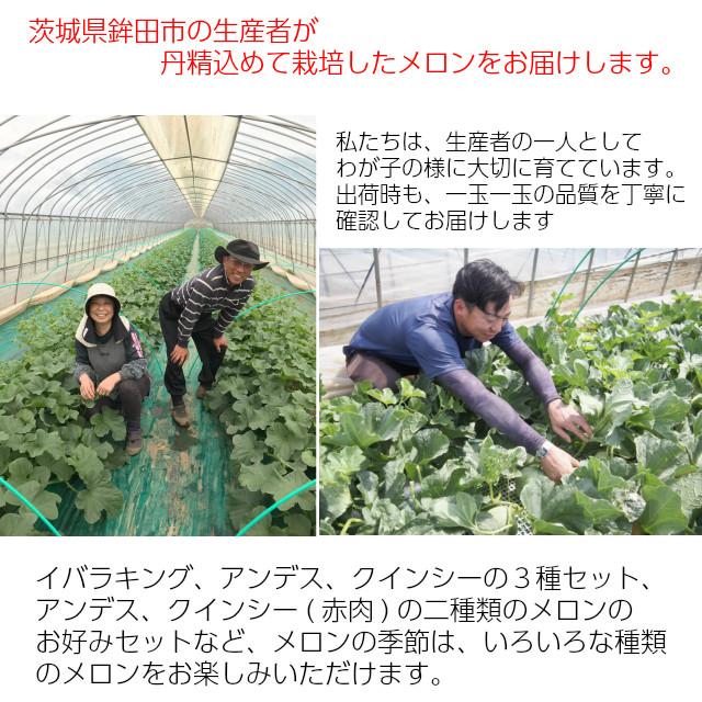 茨城県鉾田市の生産者が、丹精込め宛て栽培したメロンをお届けします。私たちは、生産者の一人としてわが子の様に大切に育てています。出荷時も一玉一玉の品質を丁寧に確認してお届けします。