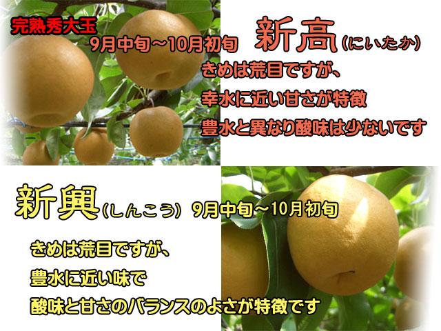 梨(幸水/豊水/新高/新興)