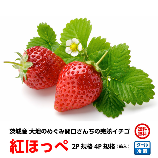 苺,いちご,イチゴ,紅ほっぺ,関口さんちの茨城イチゴ,お取り寄せ,ギフト,地元で話題の、甘くて美味しい「完熟イチゴ」です。