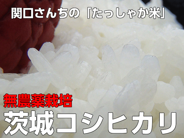 送料無料,こめ,米,無農薬栽培コシヒカリ,白米,玄米,5kg,関口さんちのたっしゃか米コシヒカリ