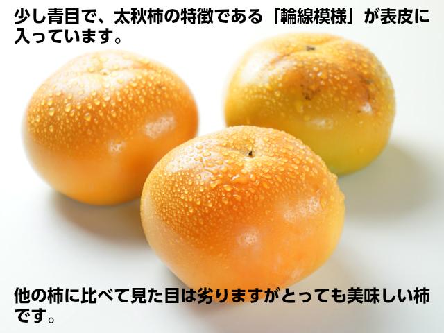 太秋柿,少し青めで太秋柿特有の輪線模様が表皮に入ってます,見た目は落としますがとっても美味しい柿,鈴木さんちの柿,フルーツ