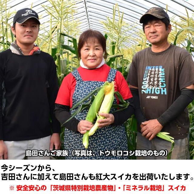 今年から、島田さんご家族が出荷に加わります。吉田さん同様甘いスイカ(紅大)すいか 【楽ギフ】お中元 ギフト