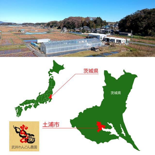 茨城県土浦市、日本一のれんこん産地。武井れんこん農園はそこにあります。