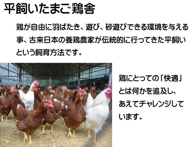 鶏舎,平飼い,卵