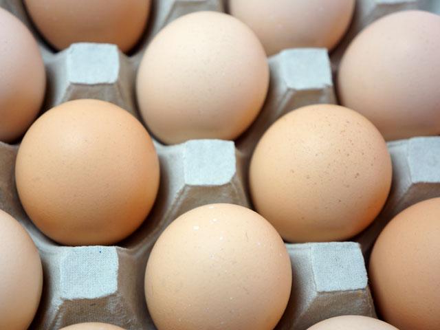産直たまご鶏舎,平飼い,卵,たまご,タマゴ,玉子,茨城,やさと,送料無料,お取り寄せ,ギフト
