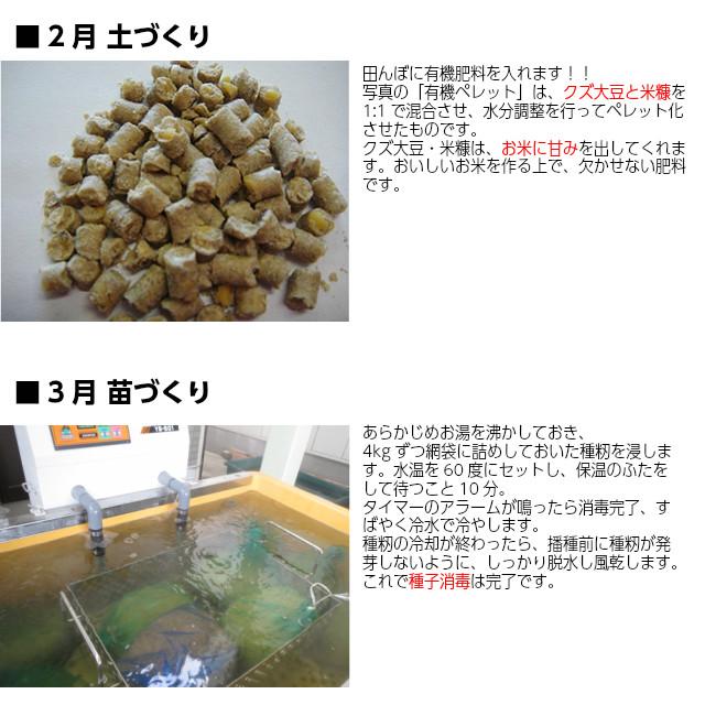 ■2月 土づくり。田んぼに有機肥料を入れます!!写真の「有機ペレット」は、クズ大豆と米糠を1:1で混合させ、水分調整を行ってペレット化させたものです。クズ大豆・米糠は、お米に甘みを出してくれます。おいしいお米を作る上で、欠かせない肥料です。3月 苗づくり。あらかじめお湯を沸かしておき、4kgずつ網袋に詰めしておいた種籾を浸します。水温を60度にセットし、保温のふたをして待つこと10分。タイマーのアラームが鳴ったら消毒完了、すばやく冷水で冷やします。種籾の冷却が終わったら、播種前に種籾が発芽しないように、しっかり脱水し風乾します。これで種子消毒は完了です。